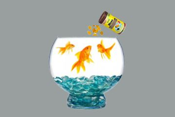 მტკნარი წყლის აკვარიუმის თევზების კვება