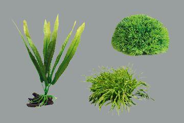 მტკნარი წყლის აკვარიუმის მცენარეები